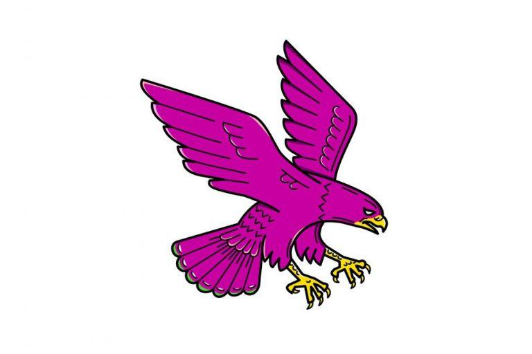 Female Falcons Podcast